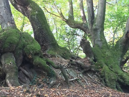 Baumgruppe Waldbaden